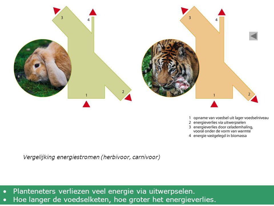 Vergelijking energiestromen (herbivoor, carnivoor) •Planteneters verliezen veel energie via uitwerpselen. •Hoe langer de voedselketen, hoe groter het