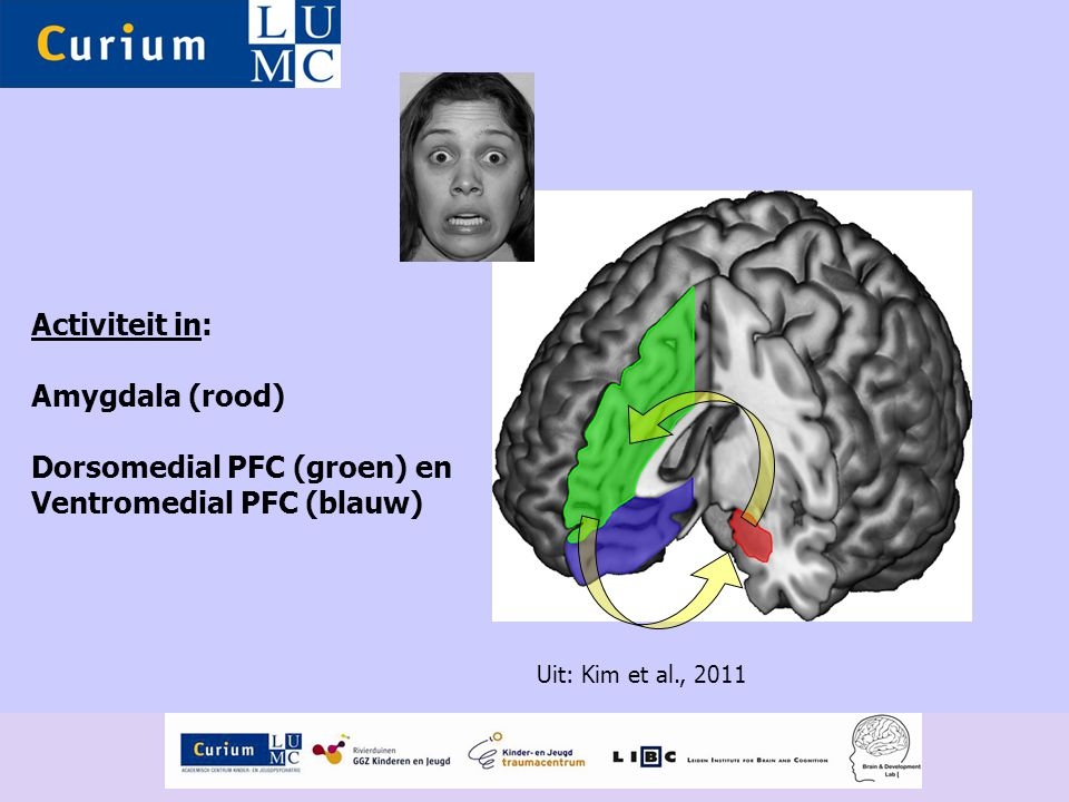 Activiteit in: Amygdala (rood) Dorsomedial PFC (groen) en Ventromedial PFC (blauw) Uit: Kim et al., 2011