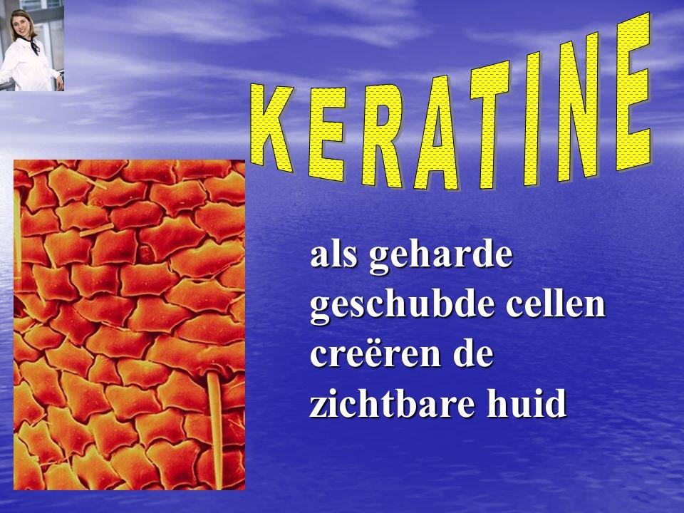 zonder biotine kunnen de cellen in de dieper gelegen huidlagen geen keratine produceren