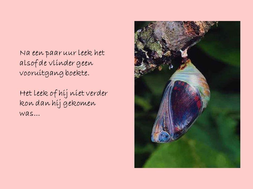 De les van de vlinder Een man zat uren te kijken naar een cocon, waarin een vlinder bezig was zijn lijf door de kleine opening van de cocon naar buiten te worstelen.