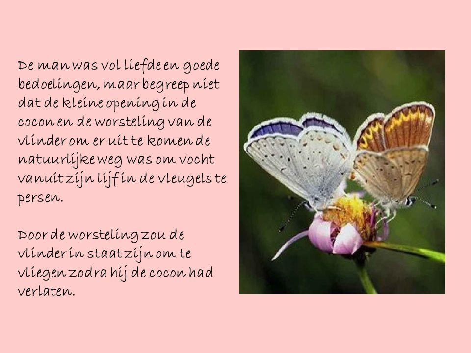 Maar er gebeurde niets.Integendeel, de vlinder leefde de rest van zijn korte leven al strompelend.