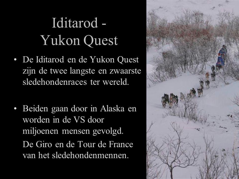 Iditarod - Yukon Quest •De Iditarod en de Yukon Quest zijn de twee langste en zwaarste sledehondenraces ter wereld.