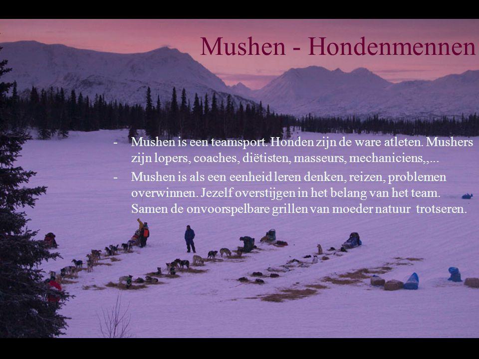 Mushen - Hondenmennen -Mushen is een teamsport. Honden zijn de ware atleten.