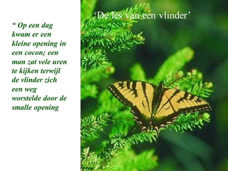 """A Butterfly's Lesson """" Op een dag kwam er een kleine opening in een cocon; een man zat vele uren te kijken terwijl de vlinder zich een weg worstelde d"""