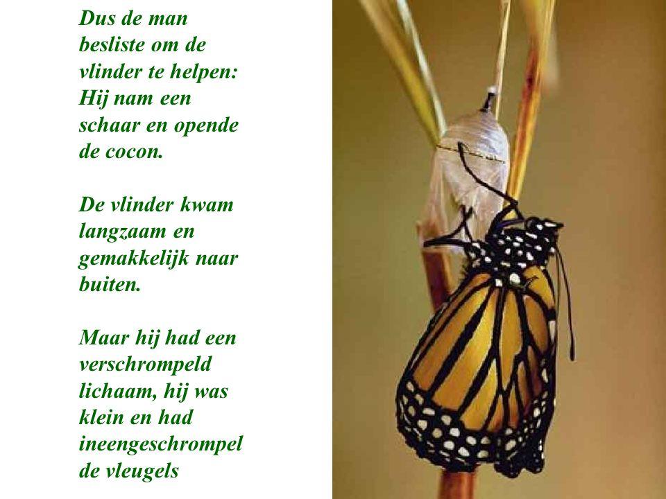 Dus de man besliste om de vlinder te helpen: Hij nam een schaar en opende de cocon. De vlinder kwam langzaam en gemakkelijk naar buiten. Maar hij had