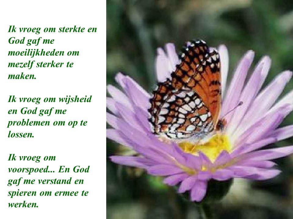 Ik vroeg om moed...En God gaf me hindernissen om te overwinnen.
