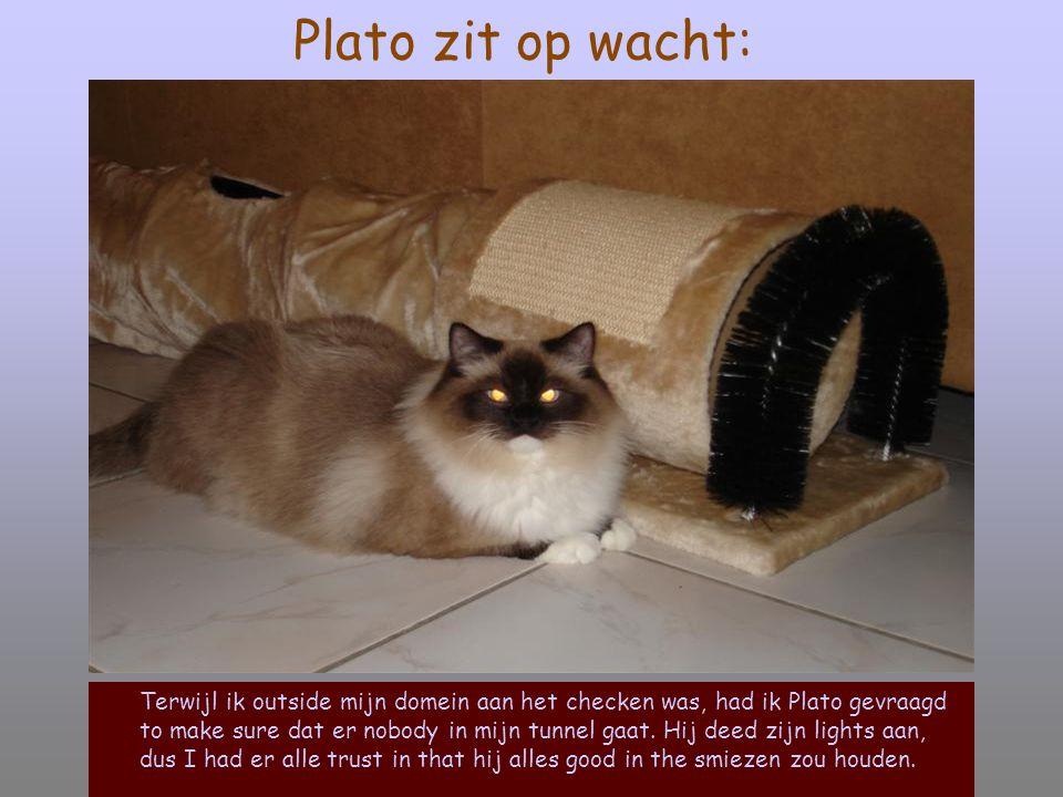 Plato zit op wacht: Terwijl ik outside mijn domein aan het checken was, had ik Plato gevraagd to make sure dat er nobody in mijn tunnel gaat.
