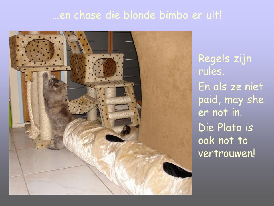 …en chase die blonde bimbo er uit.Regels zijn rules.