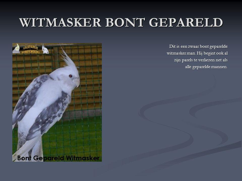 WITMASKER GEPARELD Dit is een (Wildkleur) Witmasker Geparelde pop. Ze heeft geen fel witte kop, daardoor kan je ze herkennen. Ook de parels blijven st