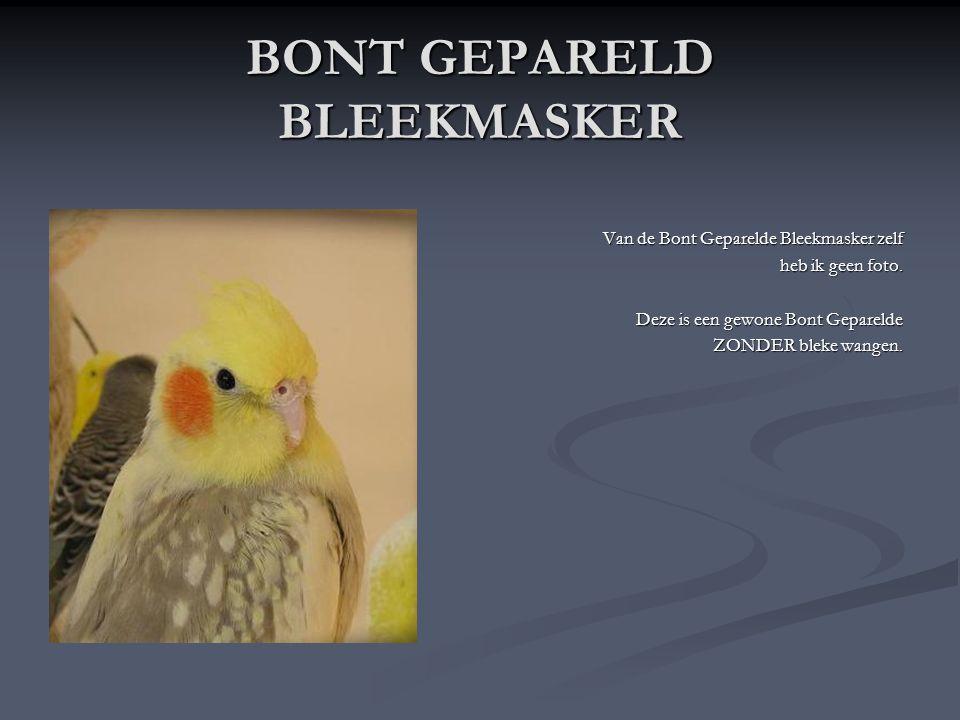 GEPARELD BLEEKMASKER Hier is een Geparelde Bleekmasker pop te zien.