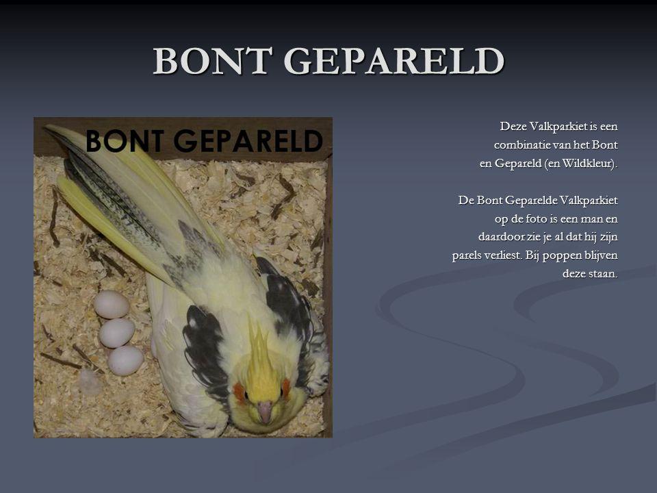 GEPARELD De Geparelde Valkparkiet heeft ook als basiskleur het Wildkleur. Enkel heeft deze er nog wit/gele parels erop. Na 1 jaar verliezen de mannen
