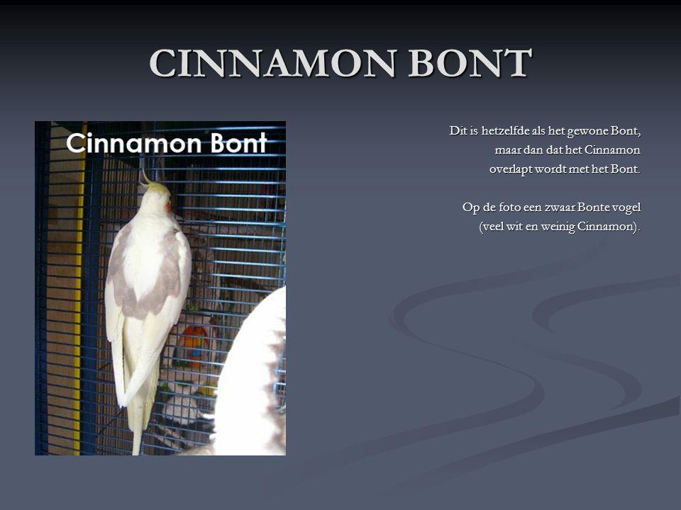 CINNAMON Cinnamon of lichtbruin komt in dezelfde meermutaties voor als de Wildkleur Valkparkiet. Het Cinnamon komt nu meer en meer voor en de prijs ga