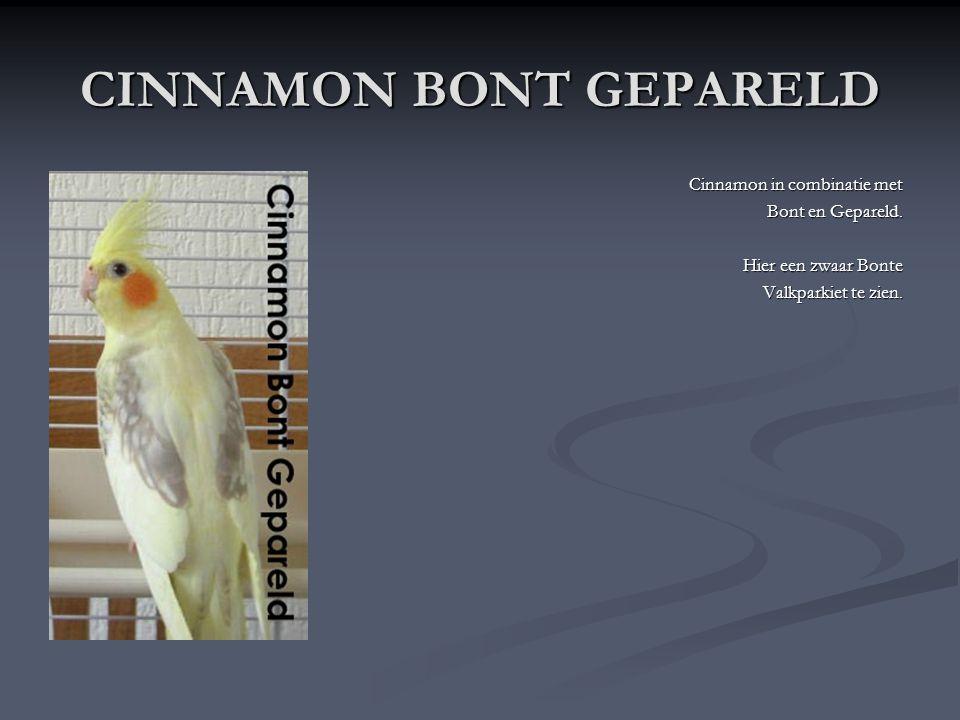 CINNAMON GEPARELD Deze Valkparkiet is een Cinnamon met parels erbovenop. Op de foto een EK jong 2007.
