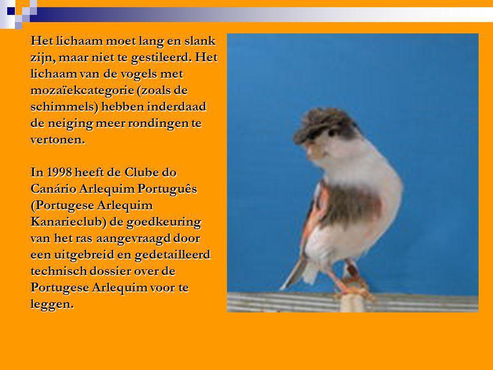 Het lichaam moet lang en slank zijn, maar niet te gestileerd. Het lichaam van de vogels met mozaïekcategorie (zoals de schimmels) hebben inderdaad de