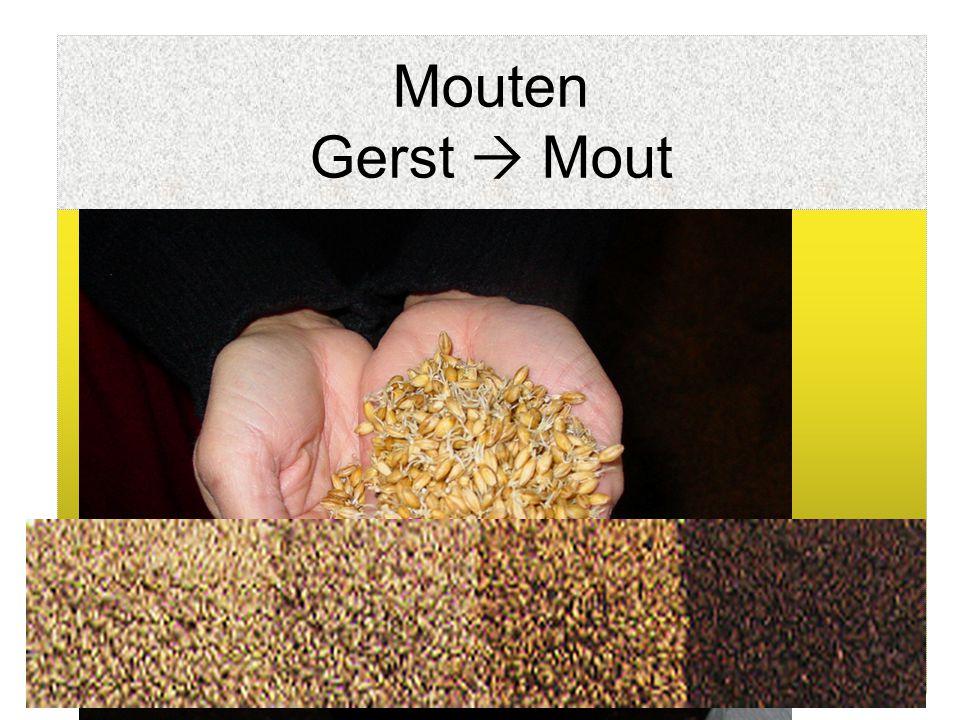 Mouten Gerst  Mout Hoe? Reiniging van gerst Weken in water (vochtgehalte: 12%  45%) Kiemen (1 week) Eesten:- Drogen (50°C) - vochtgehalte ~ 5% - Opw