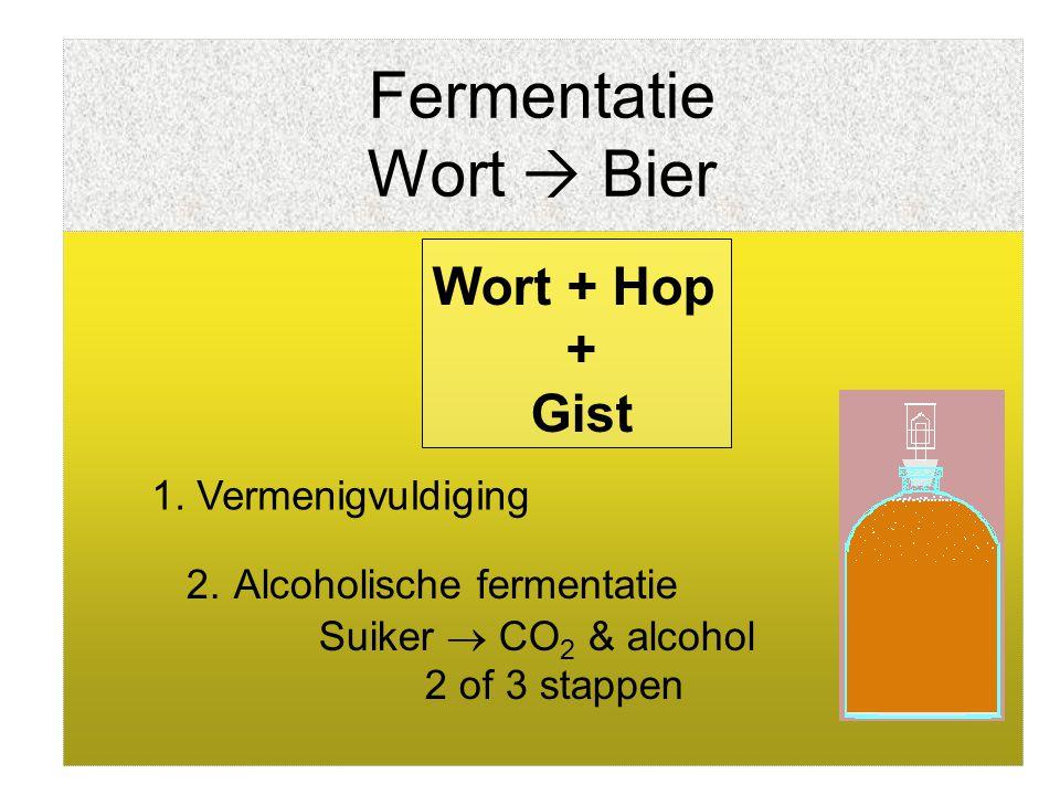 Fermentatie Wort  Bier 1. Vermenigvuldiging 2. Alcoholische fermentatie Suiker  CO 2 & alcohol 2 of 3 stappen Wort + Hop + Gist