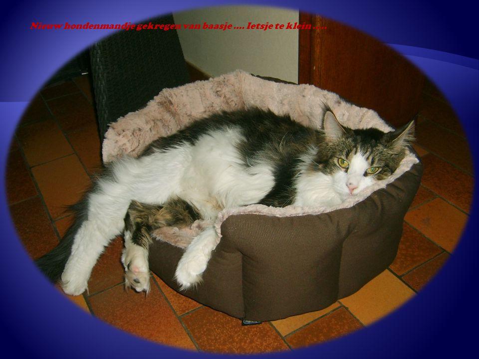 Nieuw hondenmandje gekregen van baasje …. Ietsje te klein …..