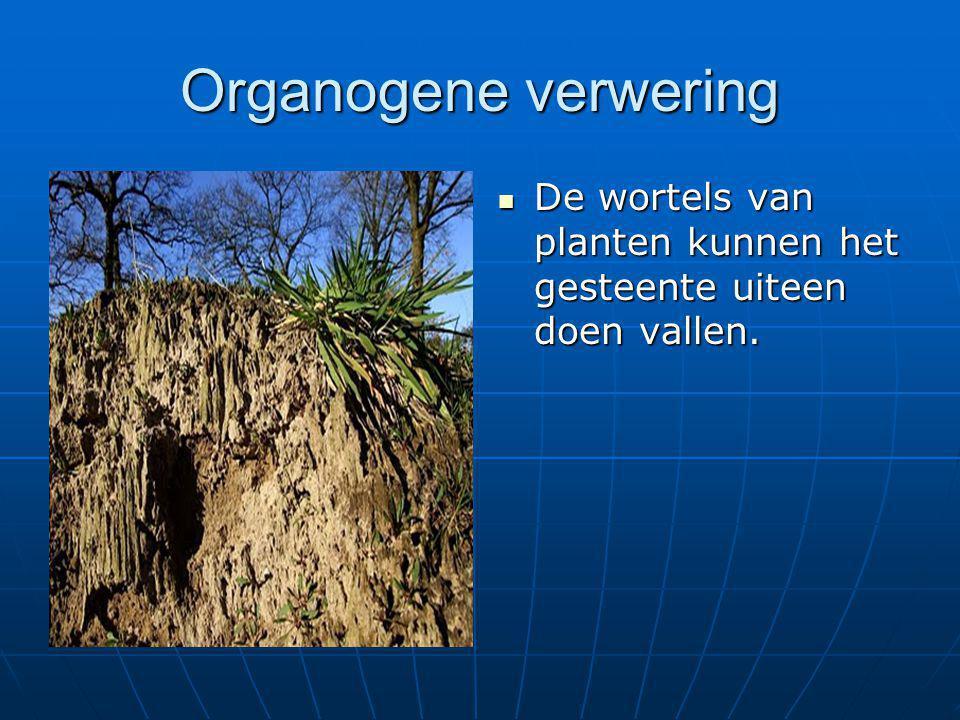Organogene verwering  De wortels van planten kunnen het gesteente uiteen doen vallen.