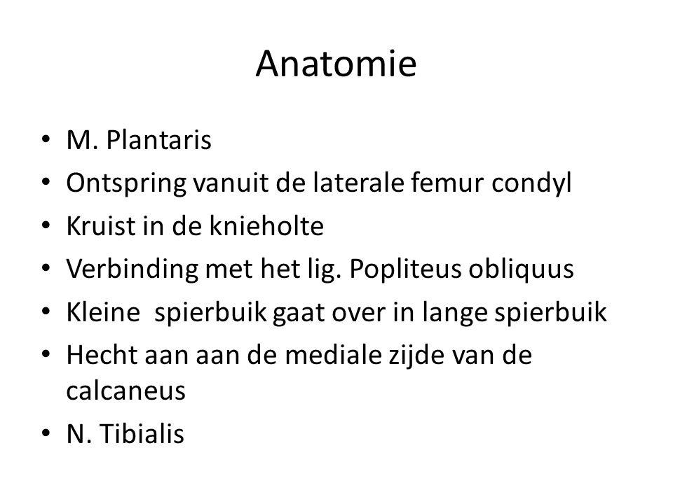 Anatomie • M.