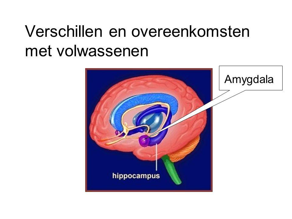 Verschillen en overeenkomsten met volwassenen Amygdala