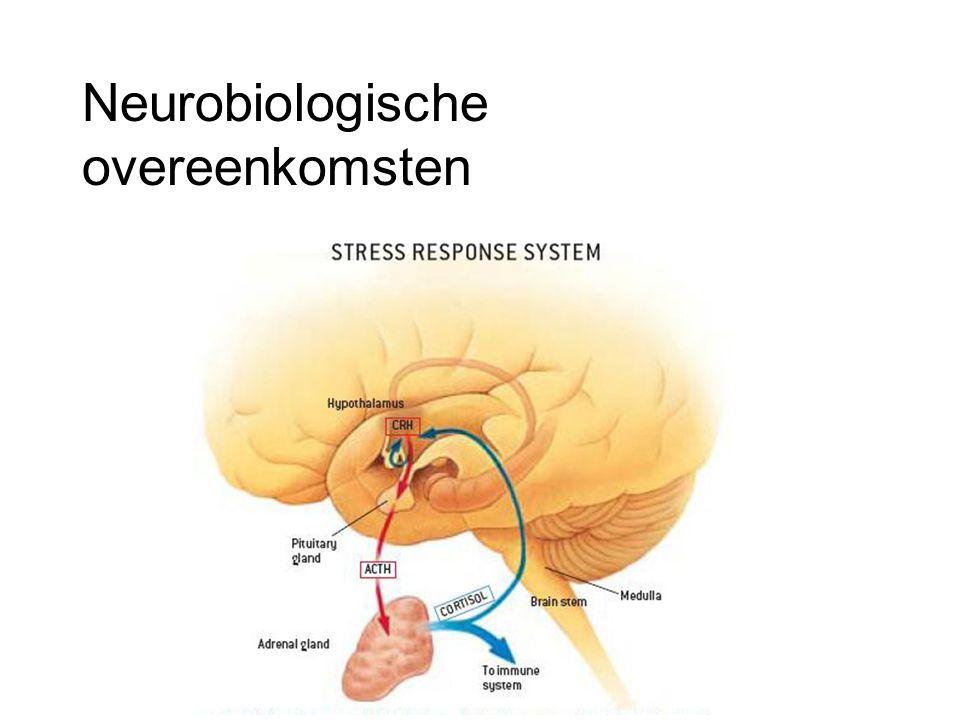 Neurobiologische overeenkomsten