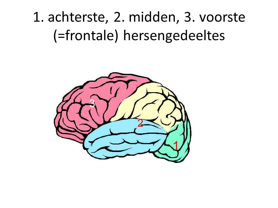 1. achterste, 2. midden, 3. voorste (=frontale) hersengedeeltes 1 2 3