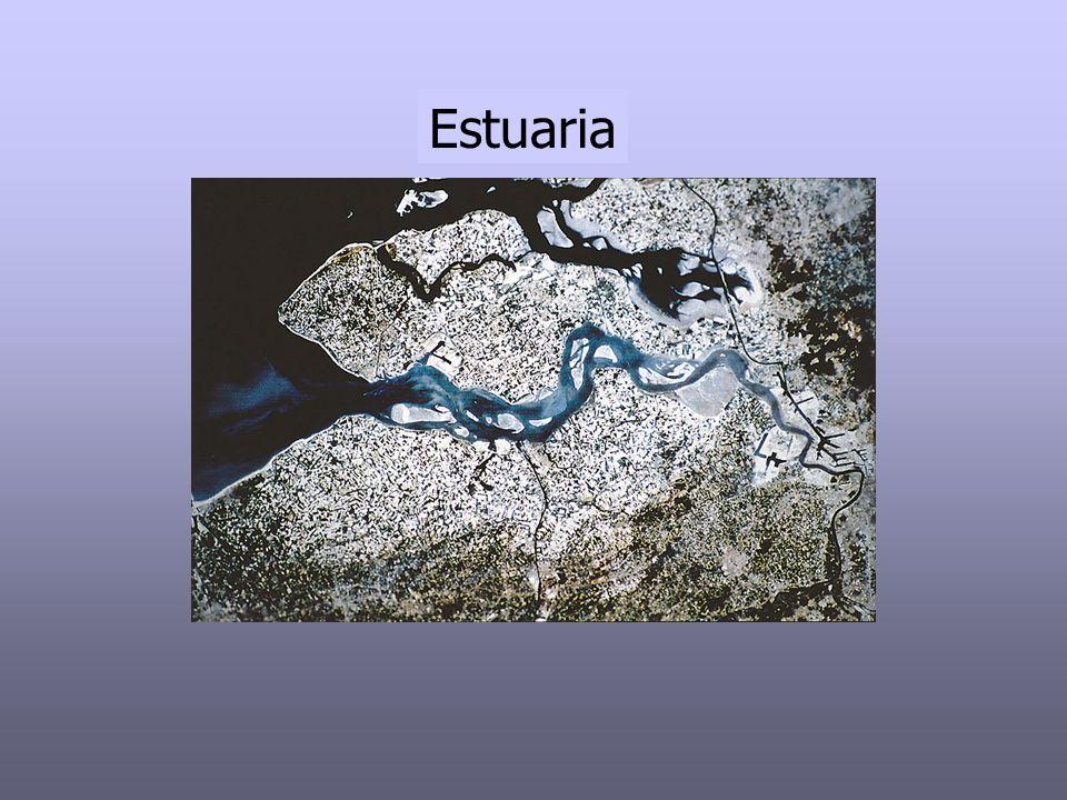 Definities : Pritchard (1952, 1967): Een estuarium is een half ingesloten watermassa langs de kust die in open verbinding staat met de open zee en waar het zeewater meetbaar vermengd is met zoet water afkomstig van terrestrische drainage.