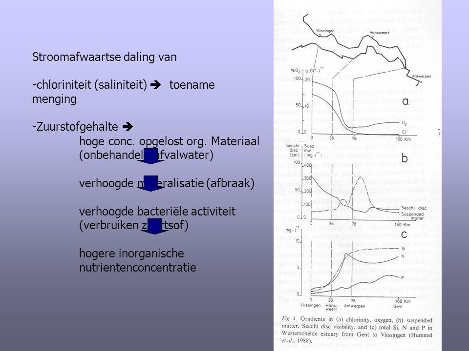 Stroomafwaartse daling van -chloriniteit (saliniteit)  toename menging -Zuurstofgehalte  hoge conc. opgelost org. Materiaal (onbehandeld afvalwater)