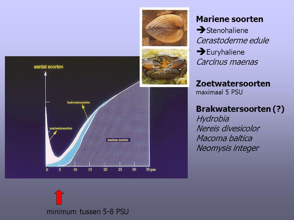 Mariene soorten  Stenohaliene Cerastoderme edule  Euryhaliene Carcinus maenas Zoetwatersoorten maximaal 5 PSU Brakwatersoorten (?) Hydrobia Nereis d