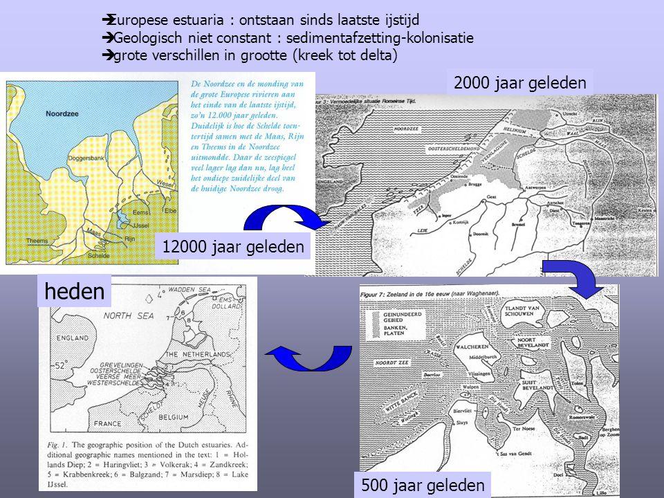  Europese estuaria : ontstaan sinds laatste ijstijd  Geologisch niet constant : sedimentafzetting-kolonisatie  grote verschillen in grootte (kreek