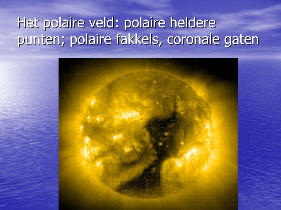 Het polaire veld: polaire heldere punten; polaire fakkels, coronale gaten