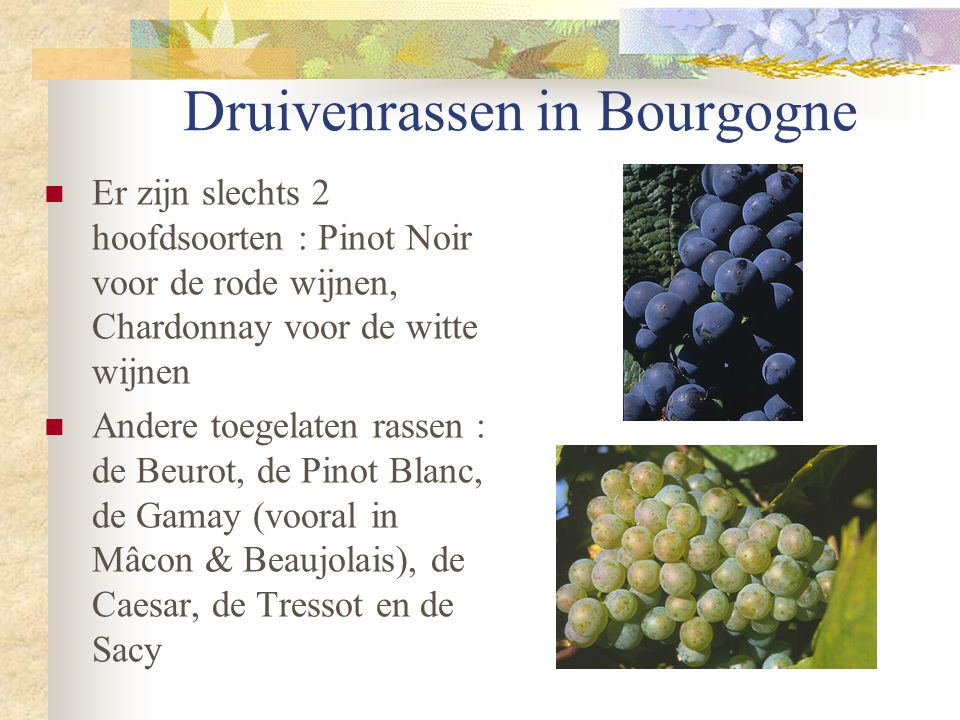 Druivenrassen in Bourgogne  Er zijn slechts 2 hoofdsoorten : Pinot Noir voor de rode wijnen, Chardonnay voor de witte wijnen  Andere toegelaten rass