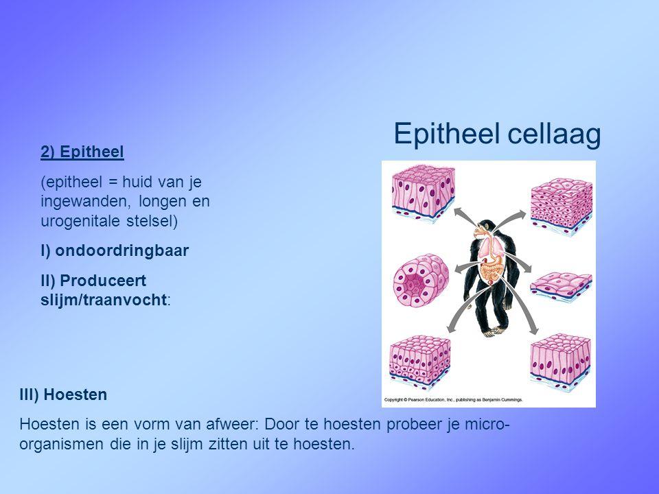 2) Epitheel (epitheel = huid van je ingewanden, longen en urogenitale stelsel) I) ondoordringbaar II) Produceert slijm/traanvocht: Epitheel cellaag III) Hoesten Hoesten is een vorm van afweer: Door te hoesten probeer je micro- organismen die in je slijm zitten uit te hoesten.