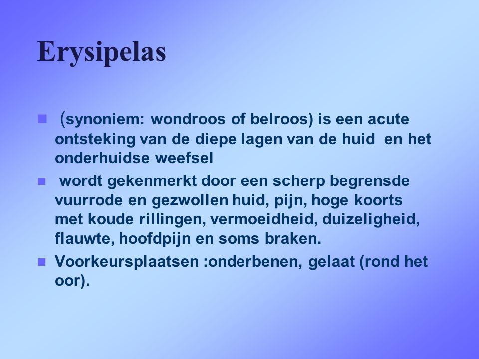 Erysipelas  ( synoniem: wondroos of belroos) is een acute ontsteking van de diepe lagen van de huid en het onderhuidse weefsel  wordt gekenmerkt doo
