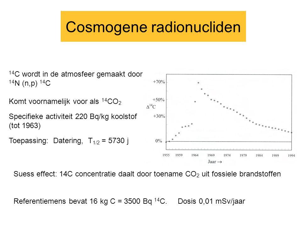 Cosmogene radionucliden 14 C wordt in de atmosfeer gemaakt door 14 N (n,p) 14 C Komt voornamelijk voor als 14 CO 2 Specifieke activiteit 220 Bq/kg koolstof (tot 1963) Toepassing: Datering, T 1/2 = 5730 j Suess effect: 14C concentratie daalt door toename CO 2 uit fossiele brandstoffen Referentiemens bevat 16 kg C = 3500 Bq 14 C.
