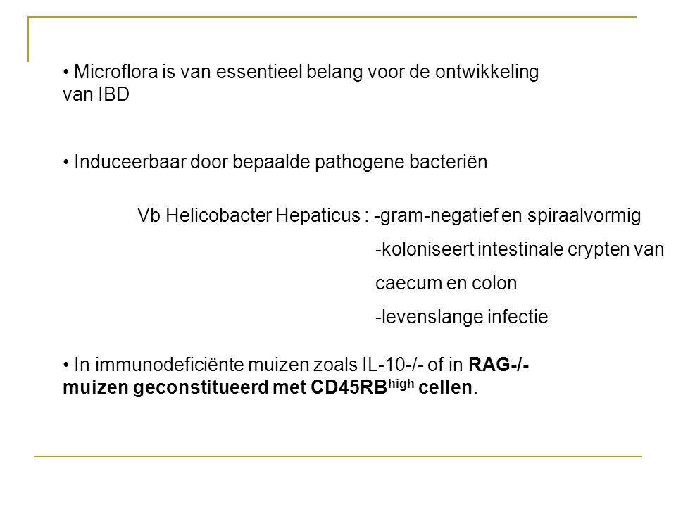 • Microflora is van essentieel belang voor de ontwikkeling van IBD • Induceerbaar door bepaalde pathogene bacteriën • In immunodeficiënte muizen zoals IL-10-/- of in RAG-/- muizen geconstitueerd met CD45RB high cellen.