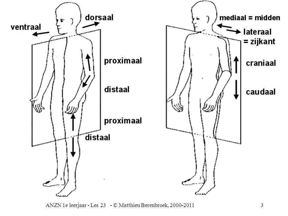 4 flexie = beweging anteflexie = naar ventraal gebogen (arm of been) buitenwaartse draaiing binnenwaartse draaiing dorsaal buiging (arm of been) ad = beweging naar mediaan toe ab = beweging van de mediaan af