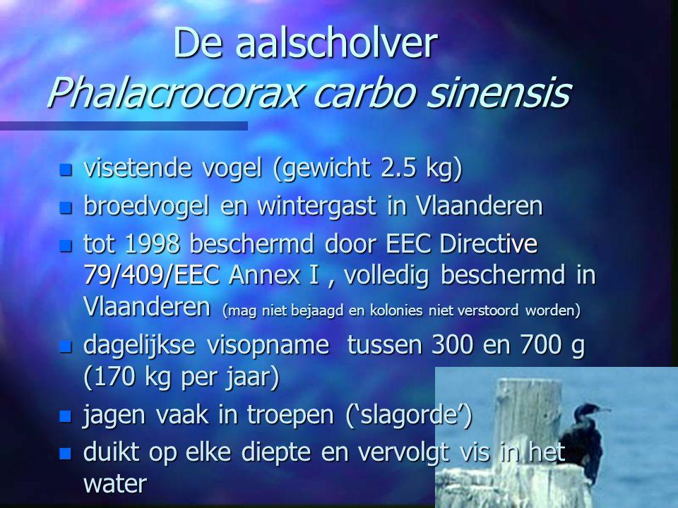 De aalscholver Phalacrocorax carbo sinensis n visetende vogel (gewicht 2.5 kg) n broedvogel en wintergast in Vlaanderen n tot 1998 beschermd door EEC