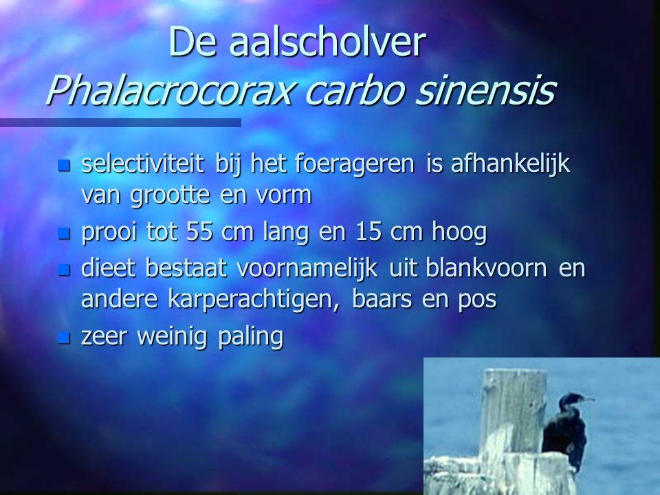De aalscholver Phalacrocorax carbo sinensis n selectiviteit bij het foerageren is afhankelijk van grootte en vorm n prooi tot 55 cm lang en 15 cm hoog