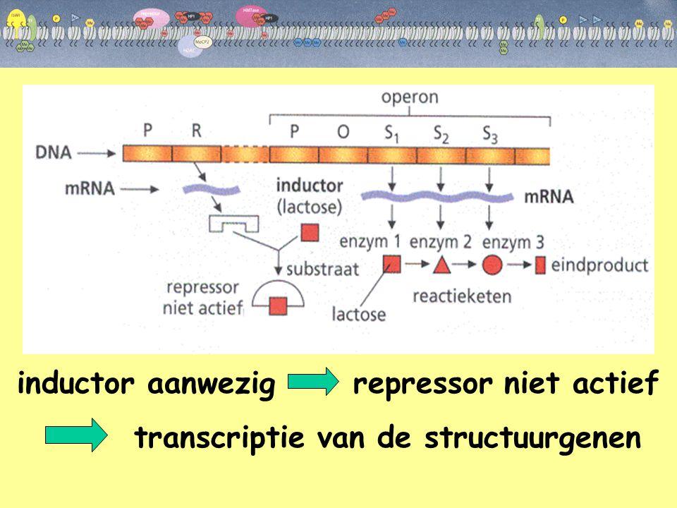 inductor aanwezig repressor niet actief transcriptie van de structuurgenen