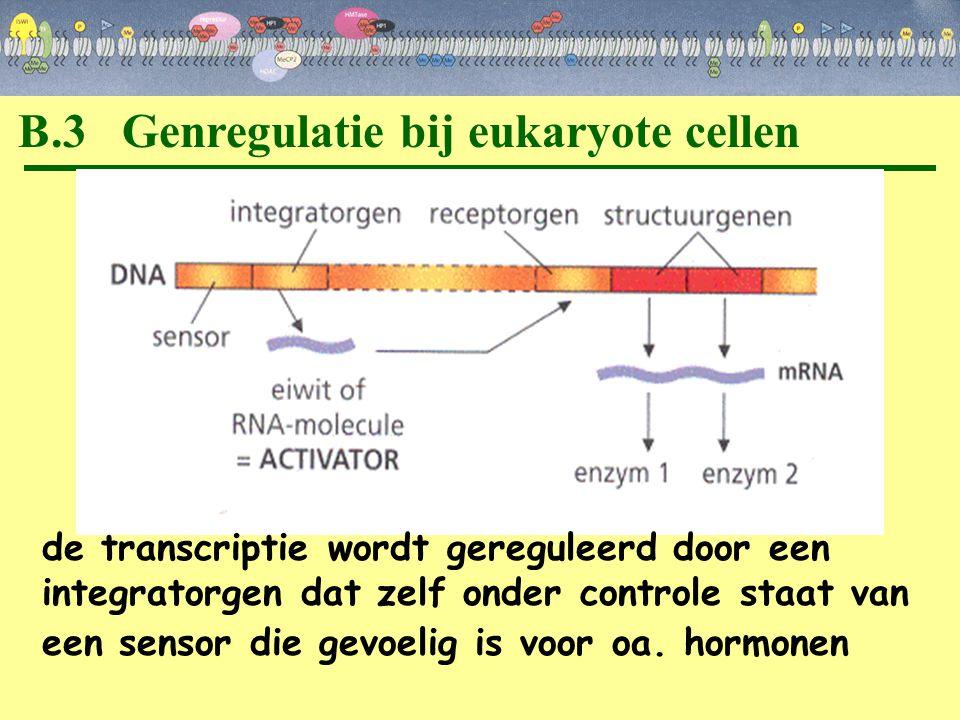 B.3 Genregulatie bij eukaryote cellen de transcriptie wordt gereguleerd door een integratorgen dat zelf onder controle staat van een sensor die gevoel