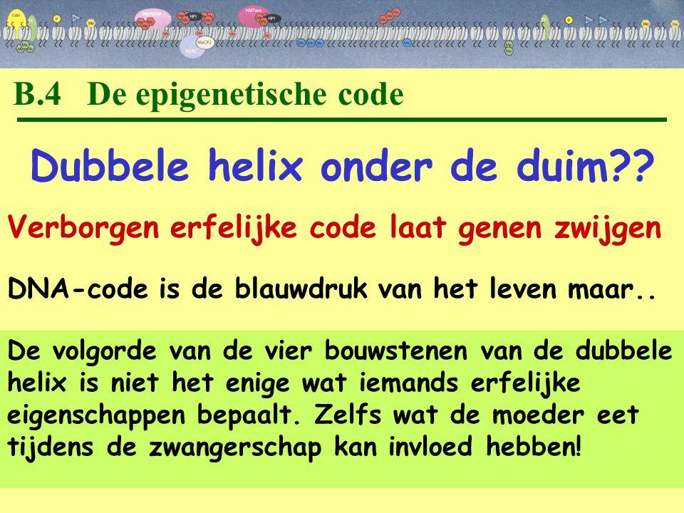 B.4 De epigenetische code Dubbele helix onder de duim?? Verborgen erfelijke code laat genen zwijgen De volgorde van de vier bouwstenen van de dubbele