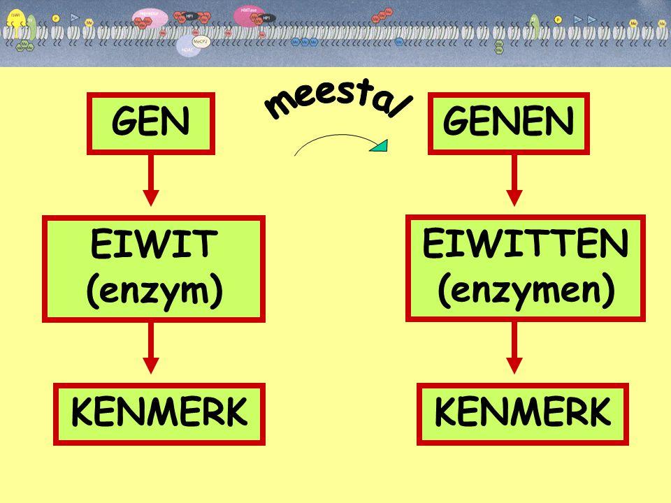GEN EIWIT (enzym) KENMERK GENEN EIWITTEN (enzymen) KENMERK