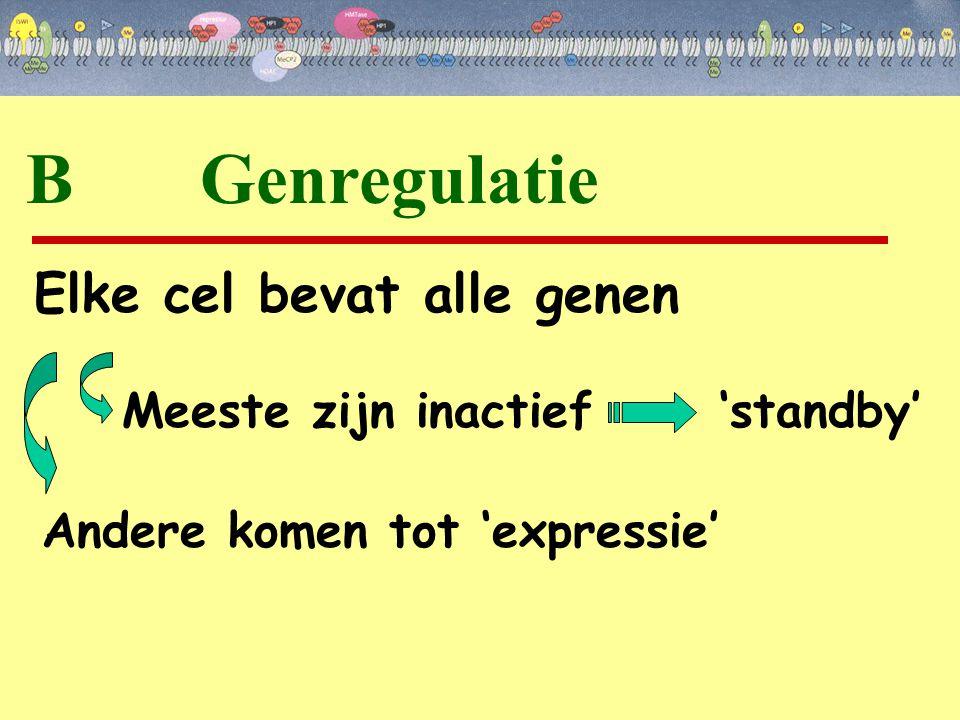 B Genregulatie Elke cel bevat alle genen Meeste zijn inactief 'standby' Andere komen tot 'expressie'