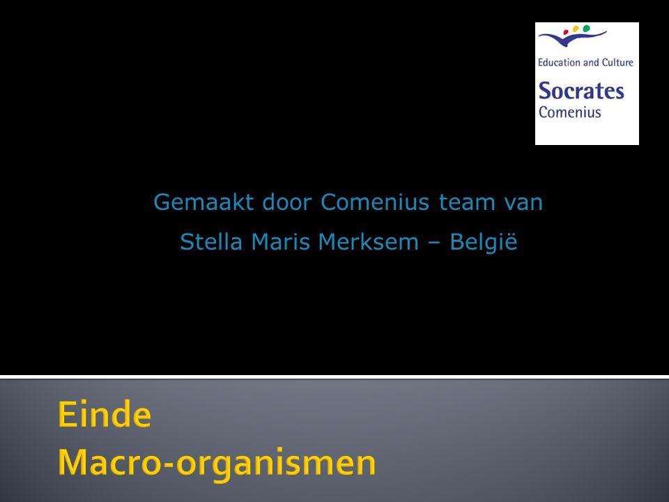 Gemaakt door Comenius team van Stella Maris Merksem – België