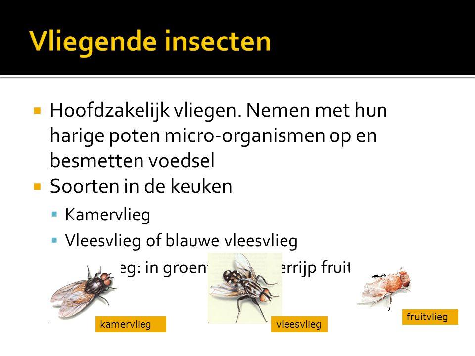  Kakkerlakken  Verspreiden micro-organismen via ▪ Uitwerpselen ▪ Lege huidjes ▪ Dode kakkerlakken  Mieren  Vooral in de zomerperiode  Verspreiden micro-organismen  Zijn alleseters  Soorten ▪ Zwarte huismier ▪ Rode faroamier