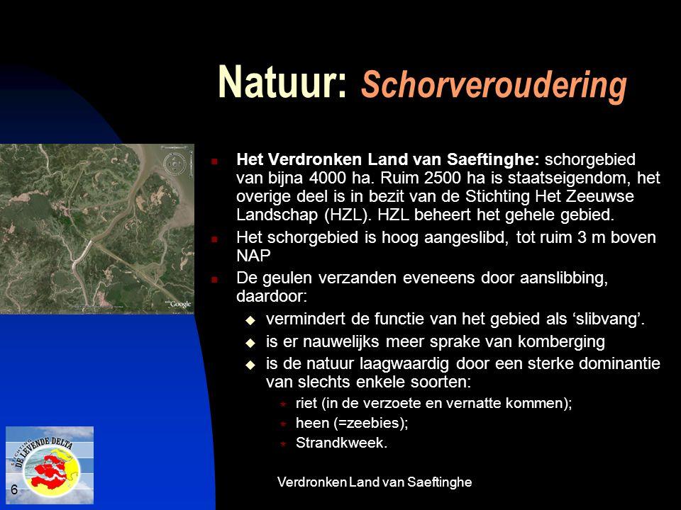 6 Natuur: Schorveroudering  Het Verdronken Land van Saeftinghe: schorgebied van bijna 4000 ha. Ruim 2500 ha is staatseigendom, het overige deel is in