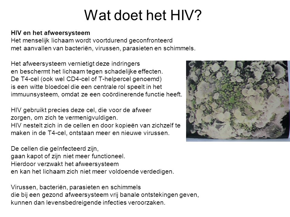 Wat doet het HIV? HIV en het afweersysteem Het menselijk lichaam wordt voortdurend geconfronteerd met aanvallen van bacteriën, virussen, parasieten en