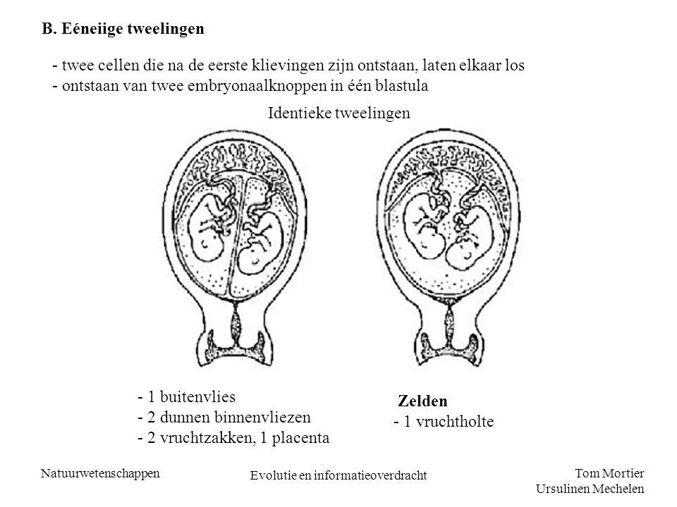 Tom Mortier Ursulinen Mechelen Natuurwetenschappen Evolutie en informatieoverdracht B. Eéneiige tweelingen - twee cellen die na de eerste klievingen z
