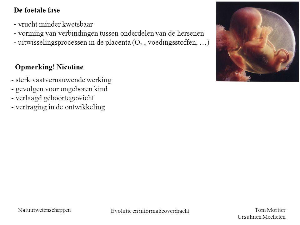 Tom Mortier Ursulinen Mechelen Natuurwetenschappen Evolutie en informatieoverdracht De foetale fase - vrucht minder kwetsbaar - vorming van verbinding